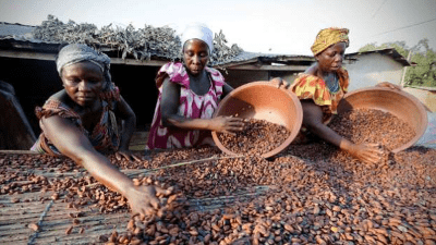 chocolate-makers-agree-to-prevent-deforestation-of-major-cacao-areas
