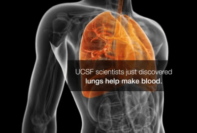function-to-make-blood-in-the-lungs